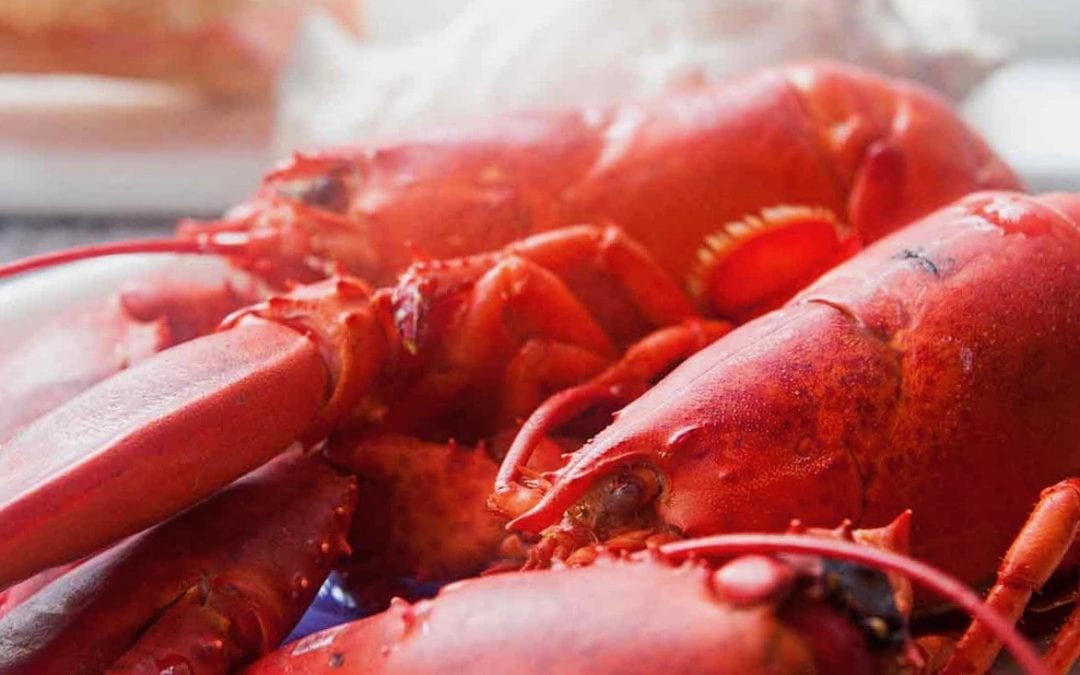 Nova Scotian Lobster Boil